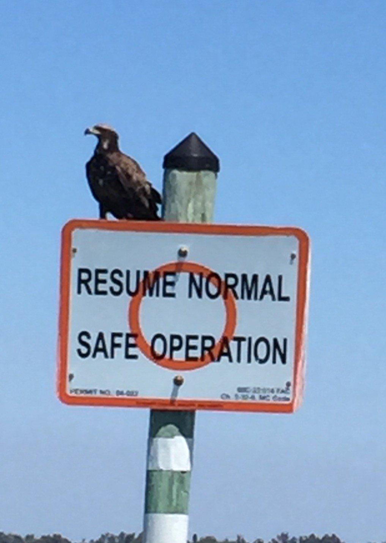 Sinbad Charters Eco Tour Eagle